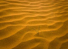 Sand desert with grass  (soft focus) Royalty Free Stock Images