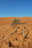 Sand desert landscape pattern with bush and branches Royalty Free Stock Photo