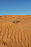 Sand desert landscape pattern with bush Royalty Free Stock Photography