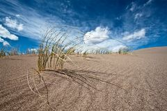 Sand and desert plants Royalty Free Stock Images