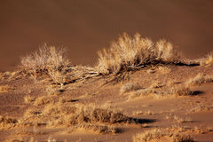 Sand desert - plants in dunes Royalty Free Stock Photography