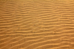 Sand in desert with scarab footprints Royalty Free Stock Photos