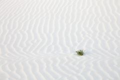 Sand desert surface Royalty Free Stock Photo