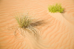Sand desert, and a yellow dune weave Stock Photo