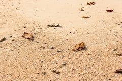 Sand detail Stock Image