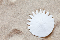 Sand dollar Stock Photography
