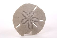 Sand-Dollar Stockbild