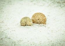 Sand-Dollar Stockbilder