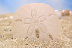 Sand Dollar Royalty Free Stock Photos