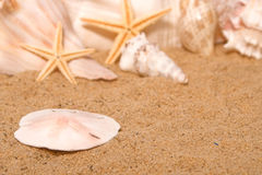 Sand Dollar. A sand dollar on the shore of the beach Royalty Free Stock Image