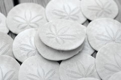 Sand Dollar. Stock Photo