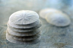 Sand Dollar. Stock Photography