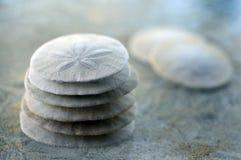 Sand Dollar. Stock Photography