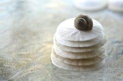 Sand Dollar. Stock Image