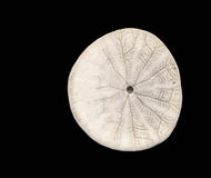 Sand dollar from below Stock Photos