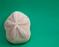 Sand Dollar on Green Stock Image