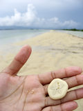 Sand dollar in hand palawan beach. Sand dollar lying flat in palm of asian girl with palawan beach background Royalty Free Stock Images