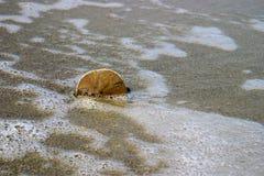 Sand-Dollar im Sand Lizenzfreies Stockfoto