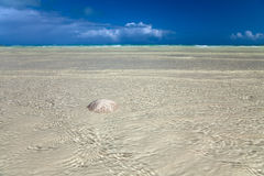 Sand dollar in the sea with sky Stock Images