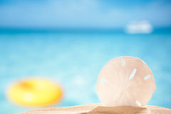 Sand dollar shell on sea beach background. Shallow dof Royalty Free Stock Images