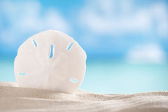 Sand dollar shell on sea and boat background Stock Image