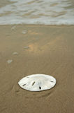 Sand Dollar on Shore. Sand dollar on a sandy beach with waves breaking in the background Stock Photos