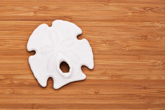 Sand dollar Stock Image