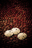 Sand dollars. Three sand dollars on red beads stock image