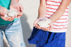 Sand dollars Royalty Free Stock Image