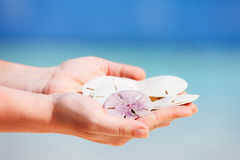 Sand dollars Royalty Free Stock Photo