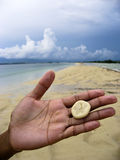 Sand dollars in hand on beach stock images