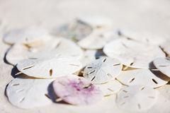 Sand dollars Stock Images
