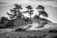 Sand-drift, trees and grass Stock Image