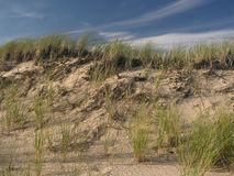 Sand dune. Dune in Cape Cod, Massachusetts Royalty Free Stock Images