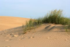 Sand Dune. Golden sand dune with green beach grass waving gently in the breeze at twilight stock photography