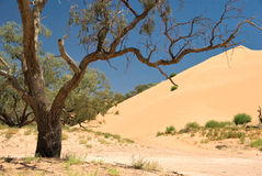 Sand Dune. With tree in Australia Stock Images