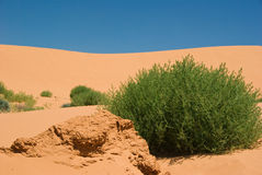 Sand Dune. With shrub in Australia Royalty Free Stock Photography