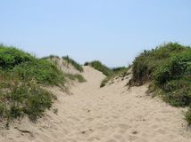 Sand Dune. Top of a sand dune Royalty Free Stock Image