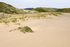 Sand dune Stock Photos