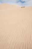 Sand dune 2. A sand dune with two grass tussocks and a cloudy sky Stock Photography