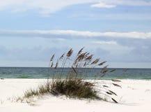 Sand Dune. A sand dune just off the beach at Pensacola Beach, Florida Royalty Free Stock Photos
