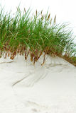 Sand dune. Wite sand dune with dune plants Royalty Free Stock Image
