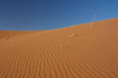 Sand dune. Red sand dune with a fine sand wave structure in the Namib desert stock photos