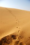 Sand dune. There is a trail of footprints on the sand dune Stock Image