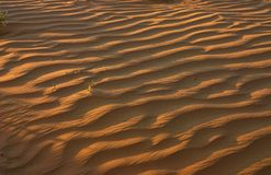 Sand-dune. Sand dune in the Negev, Israel Royalty Free Stock Photos