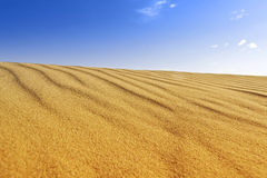 Sand dune background. Background of windswept golden sand dune and blue sky Stock Photo