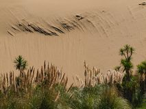 Sand dune background with lush vegetation Royalty Free Stock Photo