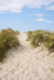 Sand dune at baltic seaside. Marram grass lined trail leading up sand dune at baltic seaside Stock Photography