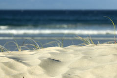 Sand Dune on beach. Image taken of some grass in a sand dune on the beach stock photo