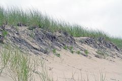 Sand Dune with Beach Grass Stock Photo